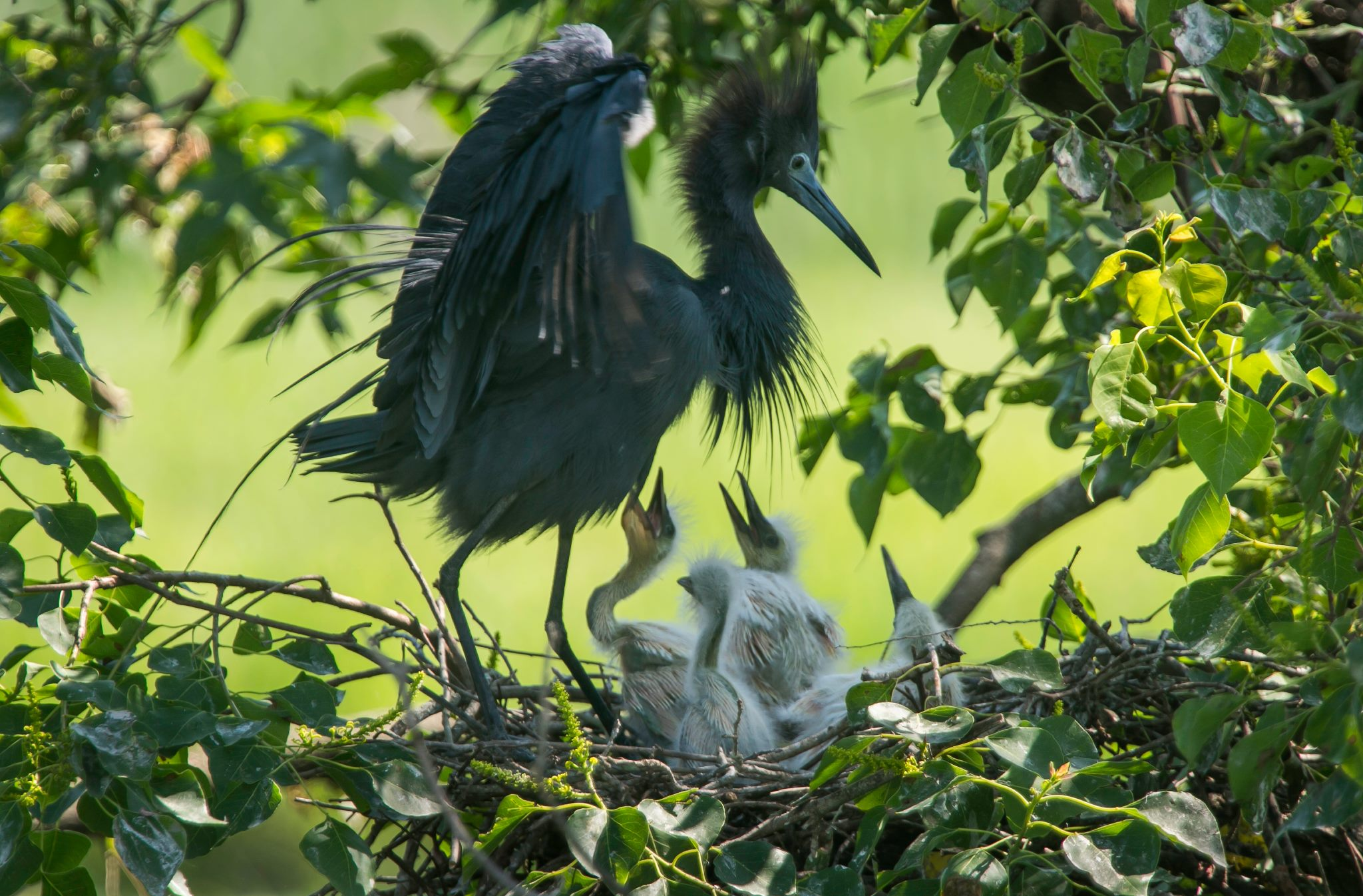 Gulf Coast birds get $35 million in help from BP oil spill settlement