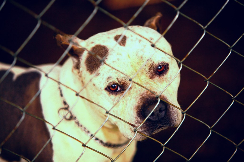 Louisiana lawmaker seeks to end automatic euthanization for dogs found at dog fighting events