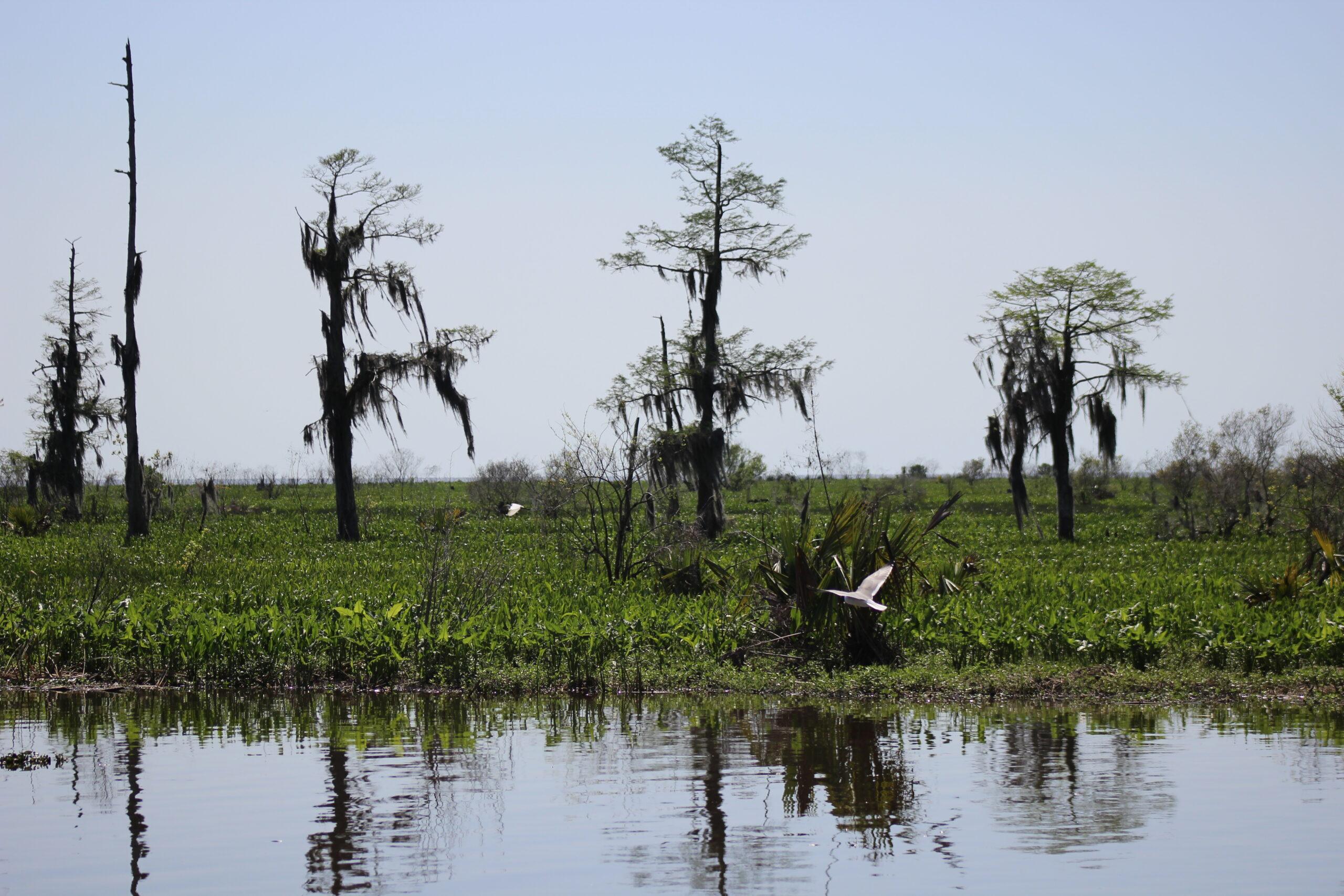 Cypress tree legislation clears House committee