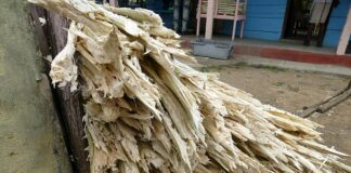 Sugar cane waste can be converted to clean biofuel